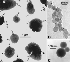 electron microscope images of black carbon attached to sulfate particles