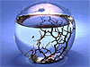 An EcoSphere