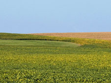 In the U.S., soybeans are a multi-billion dollar crop.