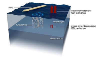 The mixed layer is a thin layer of water with nearly uniform temperature, salinity and dissolved gases