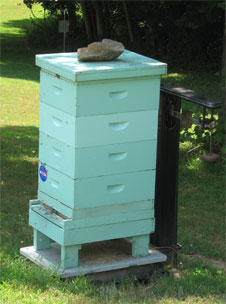 Beehive in Friendship, MD