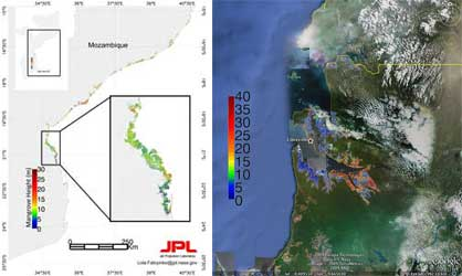 Fatoyinbo's height map of Gabon's mangrove forest canopy, left image, indicates heights ranging from 0 to 40 meters. In the right image, Fatoyinbo used Google Earth software to overlay the same three dimensional height map of Gabon's mangroves.