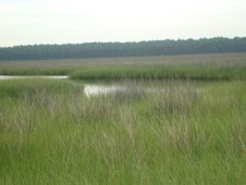 The wetland environment of coastal Mobile Bay