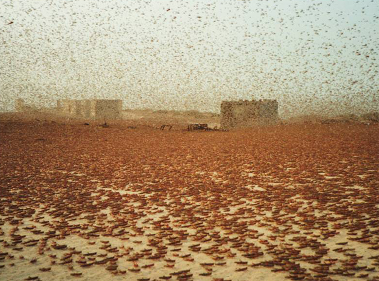 NASA - With an Eye on Locusts and Vegetation, Scientists ...