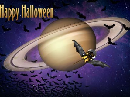 NASA bats