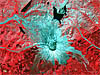 False-color satellite image of Mount St. Helens eruption