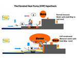Graphic illustrating the Elevated Heat Pump (EHP) hypothesis