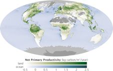 Global map of carbon stored by plants