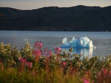 In August 2008, a small iceberg moves down the Narsarsuaq fjord in southern Greenland.