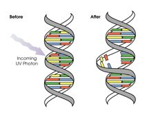 graphic showing how UV damages DNA