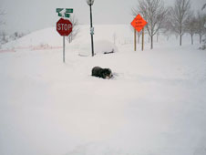 Duncan, a Bernese Mountain dog whose breed hails from Bern,  Switzerland, feels very much at home in the cold and snow.