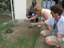 Teachers use IR thermometers to investigate the temperatures of iguanas.