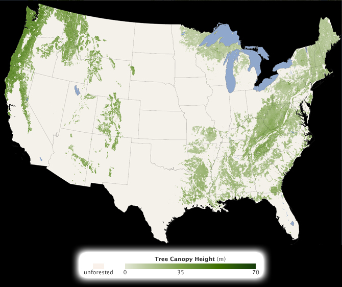 subset of new global tree canopy height map showing continental United States