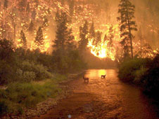 John McColgan, a member of the Alaska Forest Service, took this photograph in Bitterroot National Forest while an August wildfire raged.