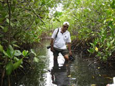 scientist Chandra Giri knee-deep in a mangrove forest