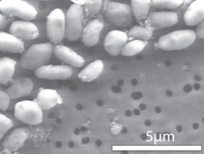 Image of GFAJ-1 grown on arsenic (click to embiggen)