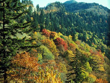 Image of the Great Smoky Mountains