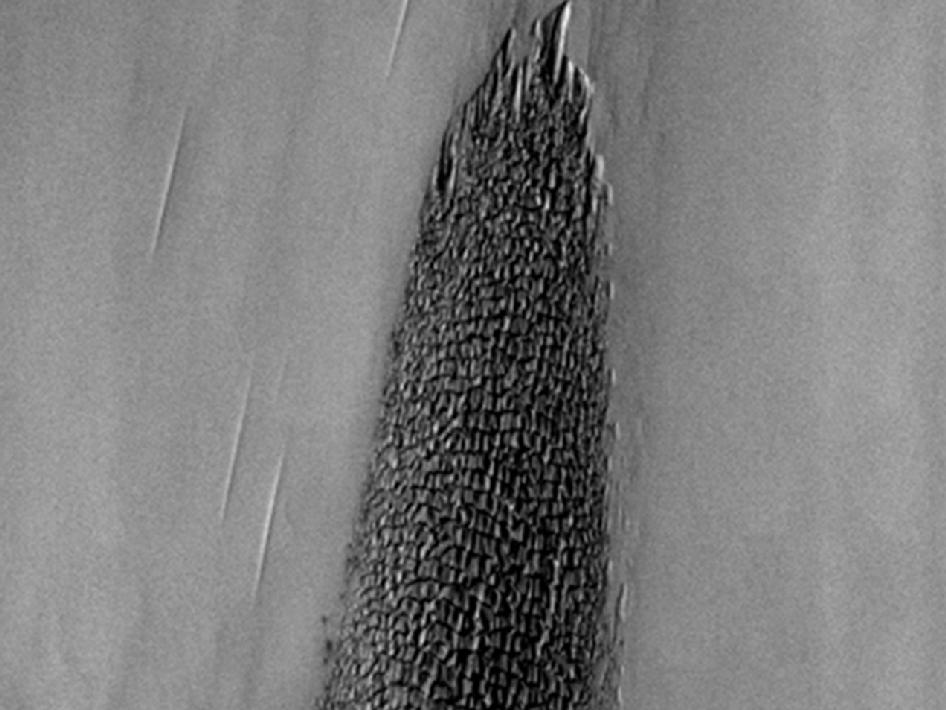 Complex line of sand dunes near the northern ice cap of Mars