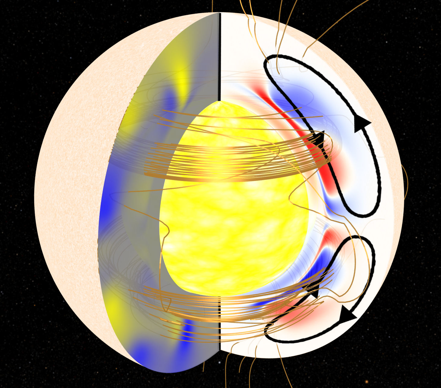 Stellar surface to the interior golden lines denote magnetic fields