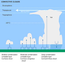 Convective clouds, a vertically developed family of clouds are cumulus and cumulonimbus.