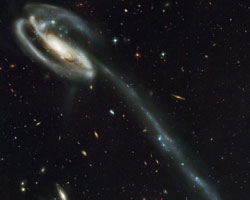 Hubble image of the Tadpole Galaxy