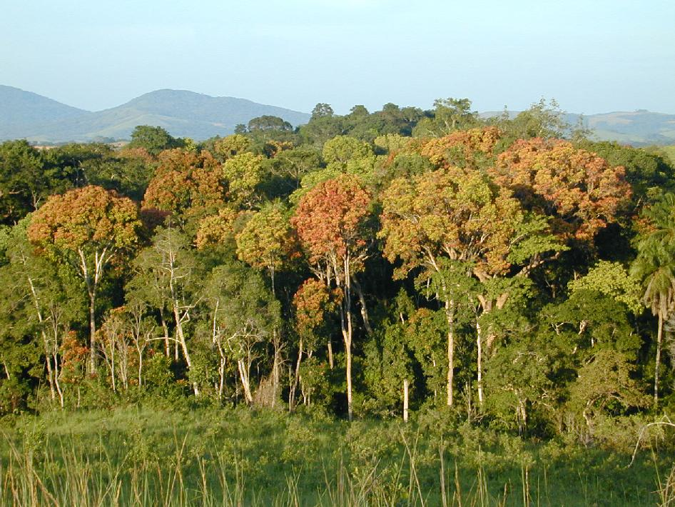 Tropical forest in Gabon, Africa