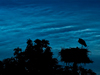 A nesting stork stands against a back drop of noctilucent clouds.