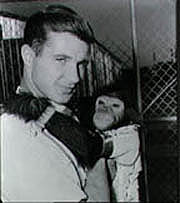 A chimpanzee being held by a researcher