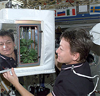 Astronaut Peggy Whitson checks a plant experiment on the International Space Station Credit: NASA