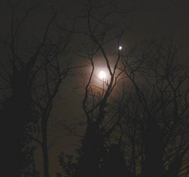 Venus and the Moon beam through some trees in Brittany