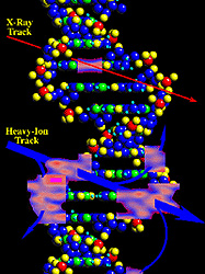 Illustration of a DNA molecule with X-ray and heavy ion tracks