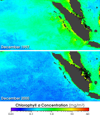 SeaWiFS data from December 1997 and December 2000