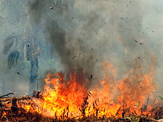 Photograph of forest fire in Indonesia
