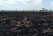 Charred field that used to be rainforest