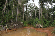 large mudhole in the rainforest