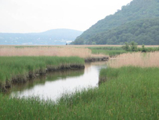 Piermont Marsh photograph