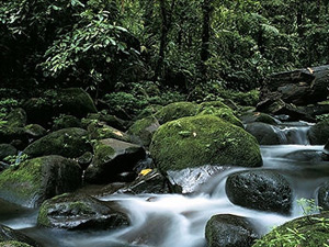 Photo of stream running through Amazon Basin