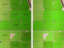 Morning, left, and afternoon, right, MASTER imagery of the study site consisting of three pistachio and eight almond blocks. Lightness in color on the right image indicates the lower vegetation canopy water content. Labels on left image are orchard block numbers.