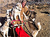 Tony Phillips poses with his dogs and sled on bare dirt