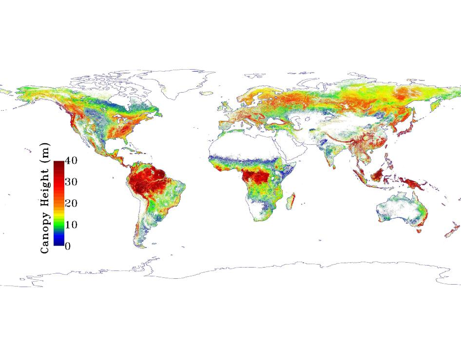 Nasa how tall are earths forests global map of forest height gumiabroncs Images