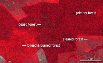 Landsat image of forest degredation in the Amazon