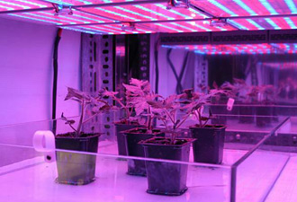 how to use grow lights timer