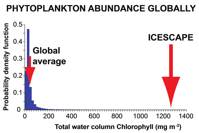graph of global phytoplankton abundance