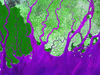 false-color delta coastline showing sediment in bright purple against landforms in shades of green