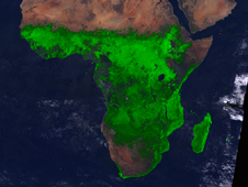 vegetation in Africa in August 1994