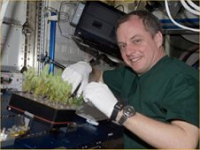 Astronaut TJ Creamer with White Spruce trees grown within the Advanced Biological Research System, or ABRS, on the International Space Station. (NASA)