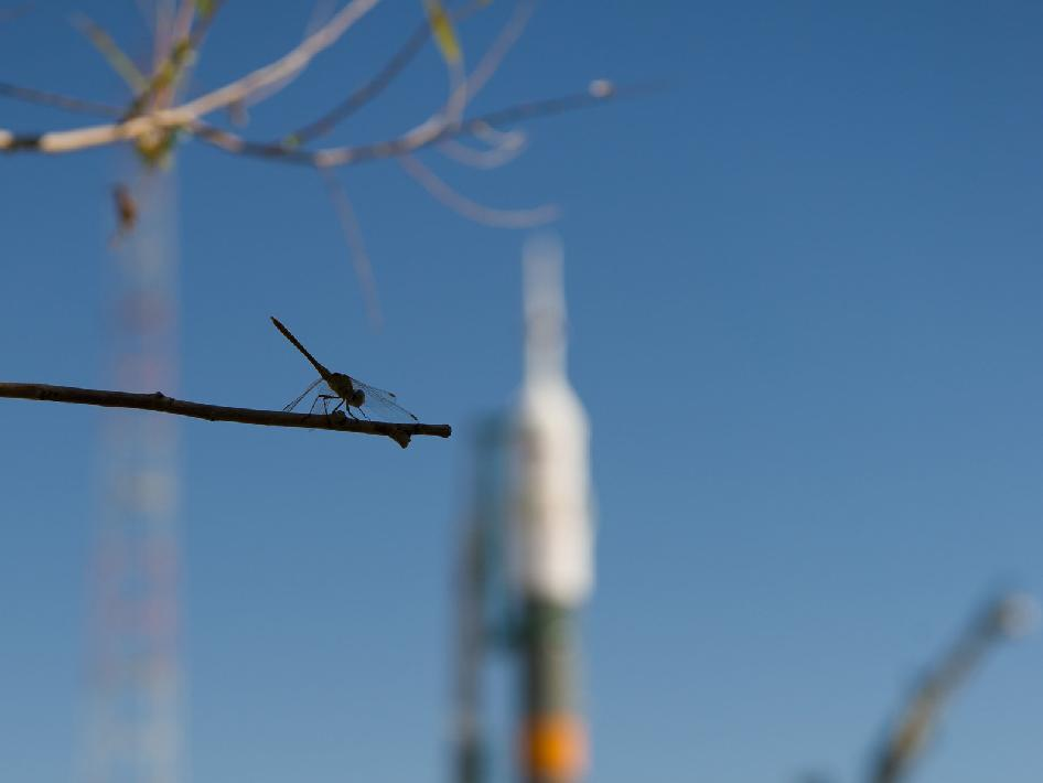 Dragonfly and Soyuz TMA-05M