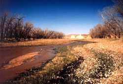Image of a Riparian wetland