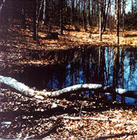Image of a seasonal wetland in Spring
