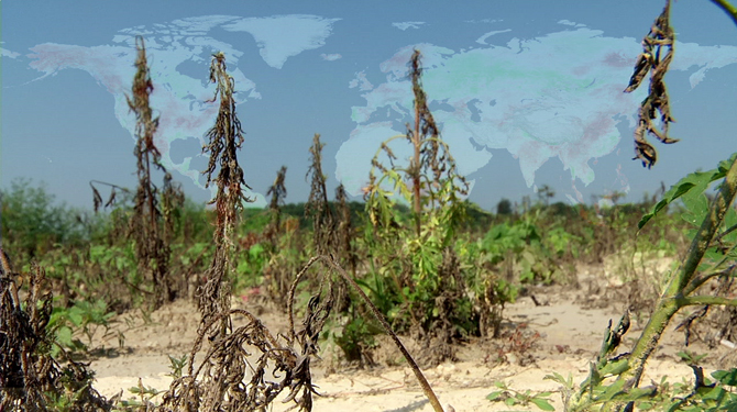 drought stricken plants suffer under a cloudless sky overlaid with a global drought map